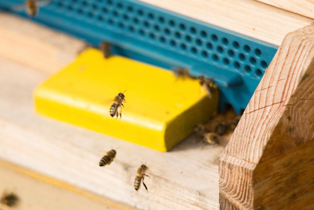bienen-fliegen-durch-die-landschaft-und-sammeln-nektar-und-bestäuben-pflanzen